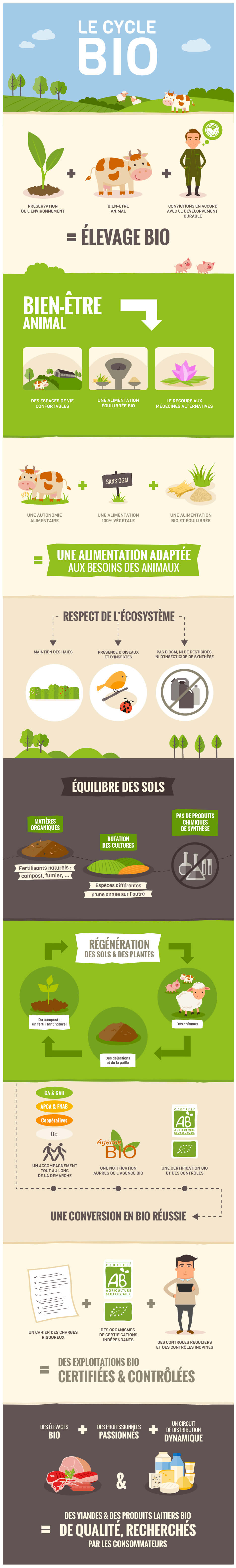 Infographie Le cycle bio